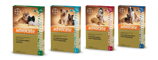 Advocate spot on for dogs between 1 - 4Kg (pack of 3)