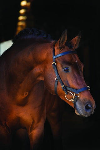 Multi Black Rambo Micklem Bridle
