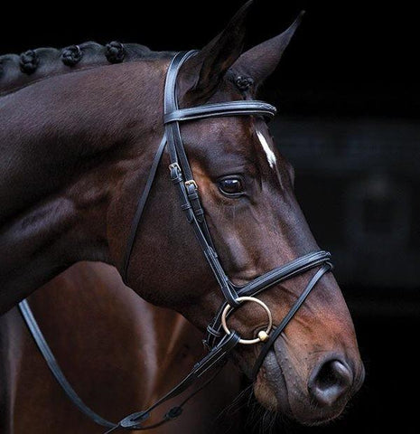 Extra Large Brown Deluxe Amigo Bridle