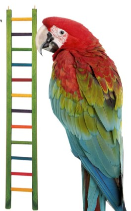 WOODEN BIRD LADDER WITH 13 STEPS