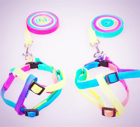 Colorful Pet Harness