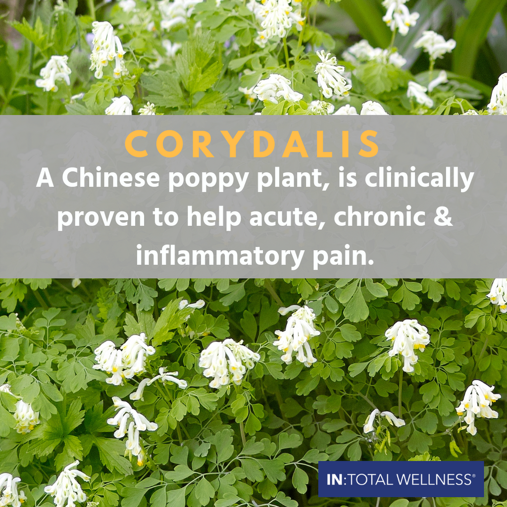 The Other Poppy: Corydalis