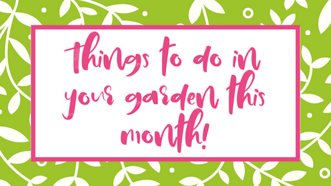 July things to do in the garden