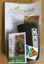 Grow Your Own Grass Head Kit