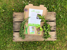 Grow Your Own Windowsill Herb Kit