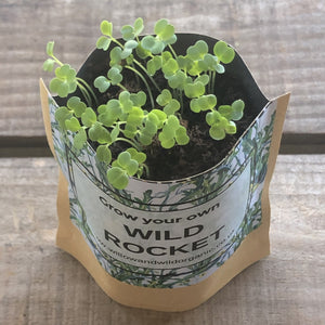 Grow your own Wild Rocket Grow Bag