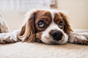 Could Your Pets Suffer From SAD?