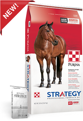 purina-strategy-professional