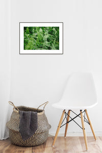Plant Poster #106 - Print Art - Exclusive Posters and Prints Online