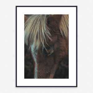 Horse Poster #135