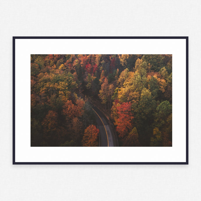 Tree Poster #355 - Print Art - Exclusive Posters and Prints Online
