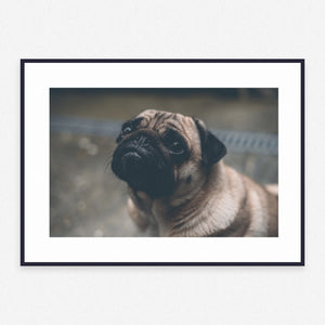 Dog Poster #445 - Print Art - Exclusive Posters and Prints Online