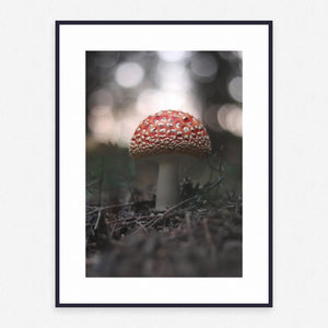 Fungus Poster #601 - Print Art - Exclusive Posters and Prints Online