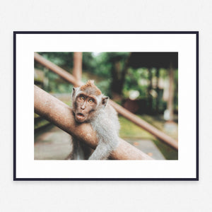 Animal Poster #858 - Print Art - Exclusive Posters and Prints Online