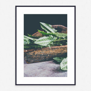 Plant Poster #1053 - Print Art - Exclusive Posters and Prints Online