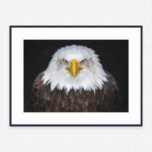 Animal Poster #1079 - Print Art - Exclusive Posters and Prints Online