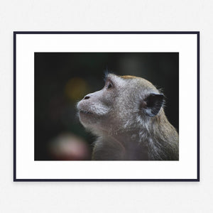 Animal Poster #1096 - Print Art - Exclusive Posters and Prints Online