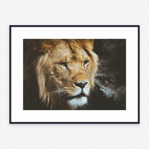 Animal Poster #1148 - Print Art - Exclusive Posters and Prints Online