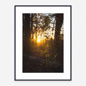 Tree Poster #1281 - Print Art - Exclusive Posters and Prints Online