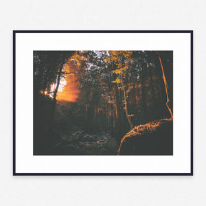 Tree Poster #1310 - Print Art - Exclusive Posters and Prints Online