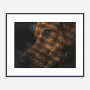 Dog Poster #1360 - Print Art - Exclusive Posters and Prints Online