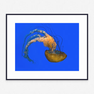 Animal Poster #1592 - Print Art - Exclusive Posters and Prints Online