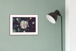 Flower Poster #1598 - Print Art - Exclusive Posters and Prints Online