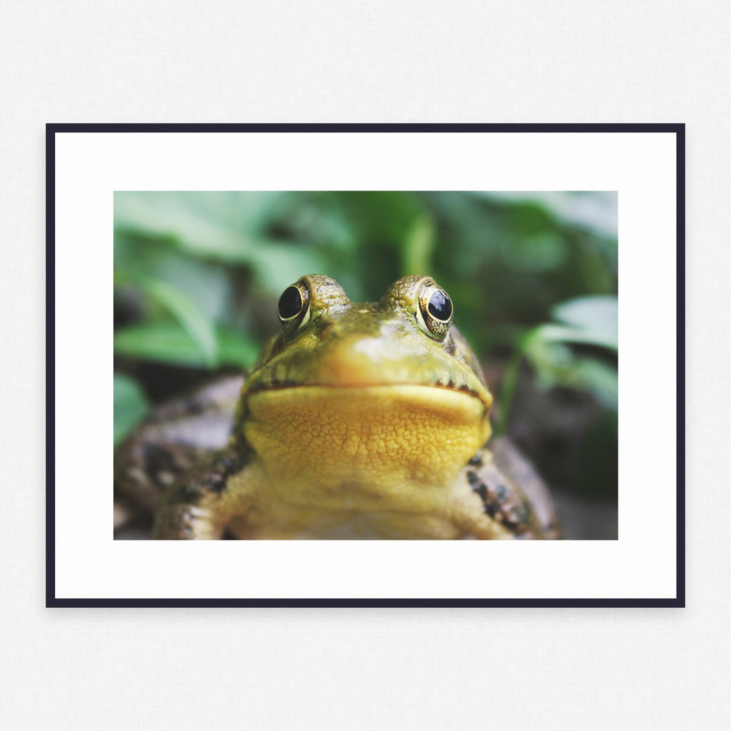 Animal Poster #1656 - Print Art - Exclusive Posters and Prints Online