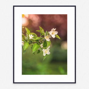Plant Poster #1661 - Print Art - Exclusive Posters and Prints Online