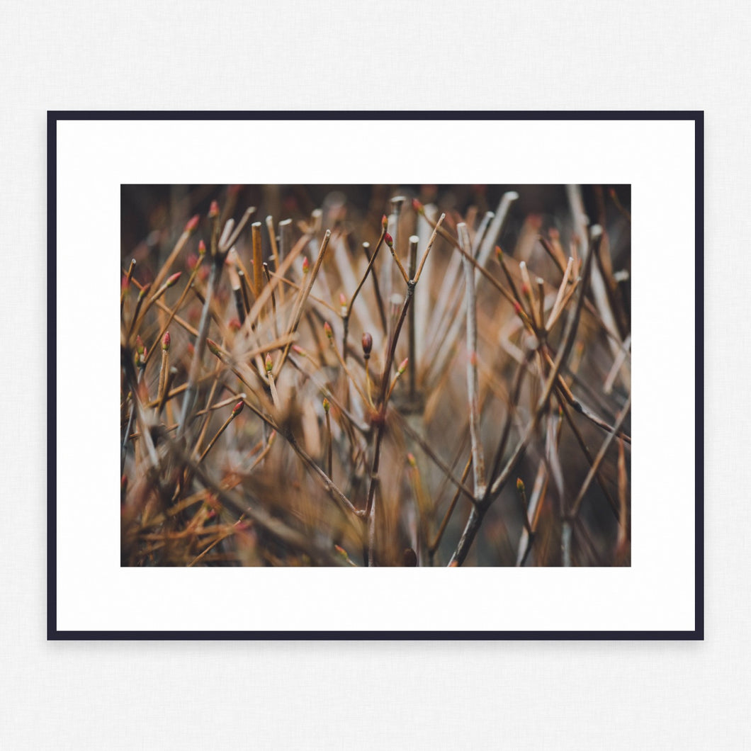 Plant Poster #1696 - Print Art - Exclusive Posters and Prints Online