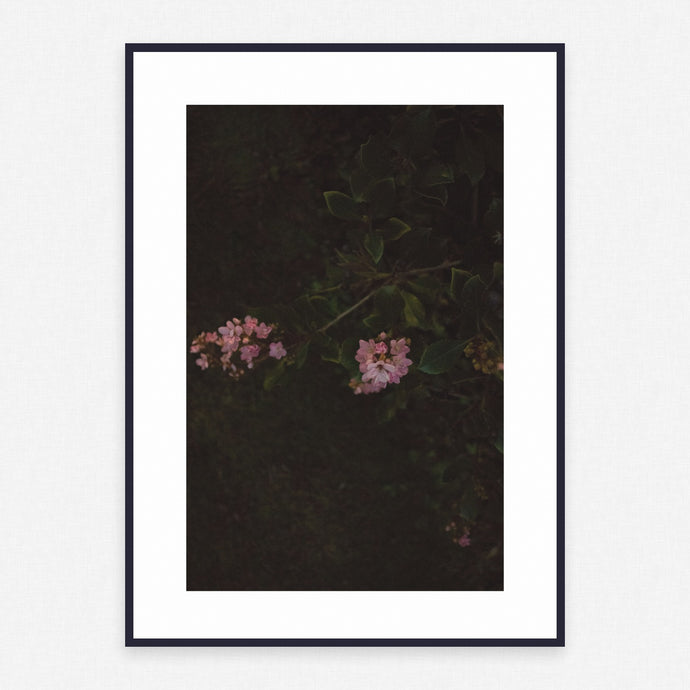 Flower Poster #1955 - Print Art - Exclusive Posters and Prints Online