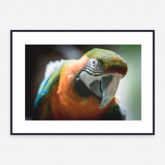 Parrot Poster #2365 - Print Art - Exclusive Posters and Prints Online