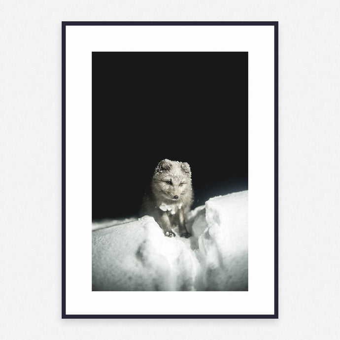 Animal Poster #2366 - Print Art - Exclusive Posters and Prints Online
