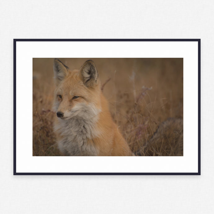 Animal Poster #2429 - Print Art - Exclusive Posters and Prints Online
