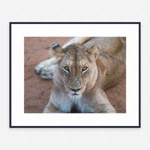 Animal Poster #2943 - Print Art - Exclusive Posters and Prints Online