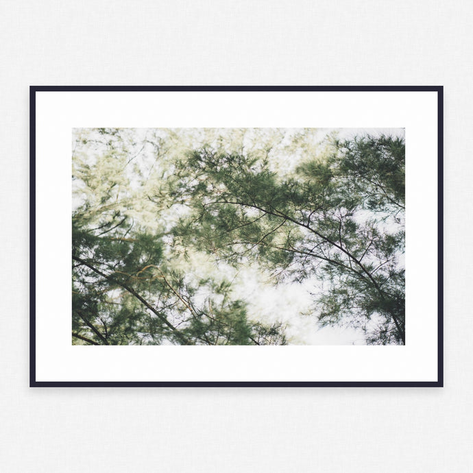 Tree Poster #3732 - Print Art - Exclusive Posters and Prints Online