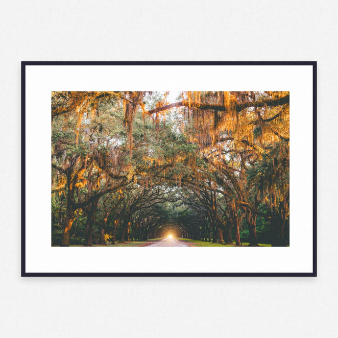 Tree Poster #3761 - Print Art - Exclusive Posters and Prints Online