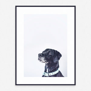 Dog Poster #4037 - Print Art - Exclusive Posters and Prints Online