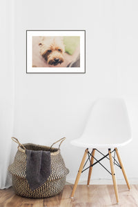Dog Poster #4105 - Print Art - Exclusive Posters and Prints Online