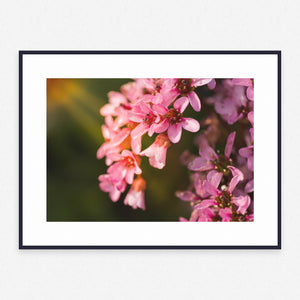 Flower Poster #4391 - Print Art - Exclusive Posters and Prints Online