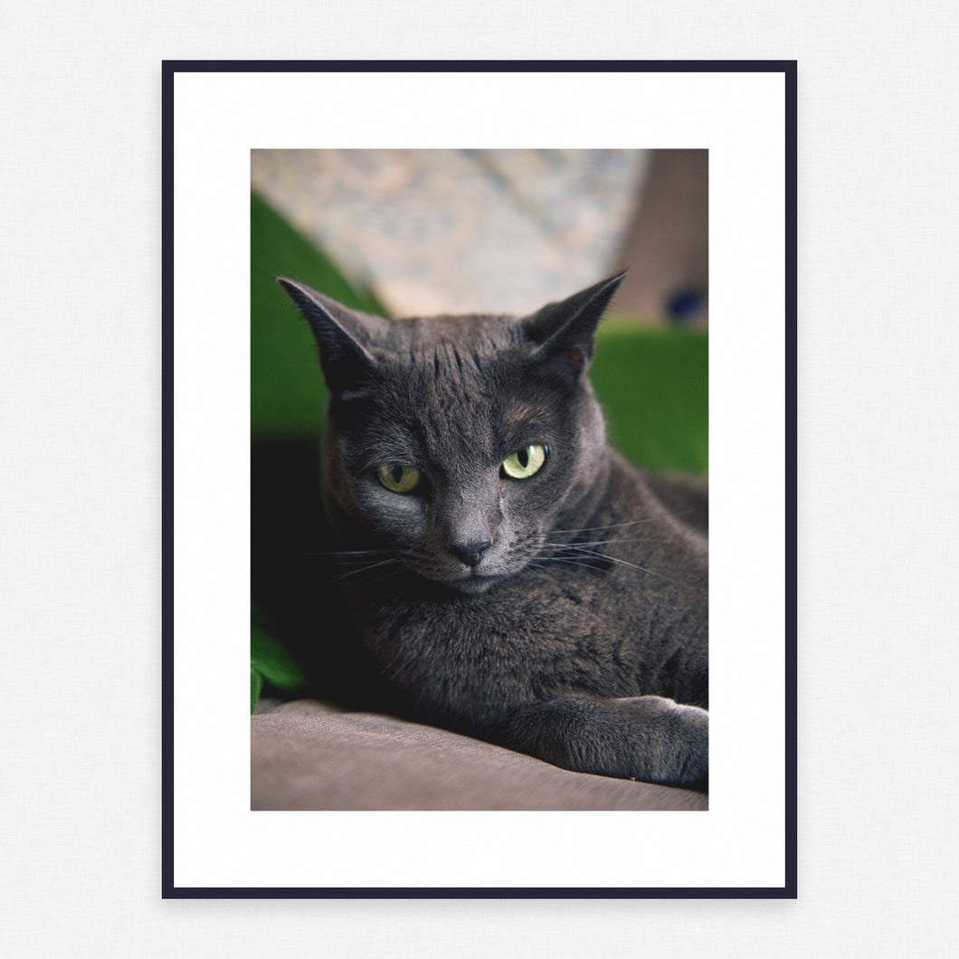Cat Poster #4443 - Print Art - Exclusive Posters and Prints Online