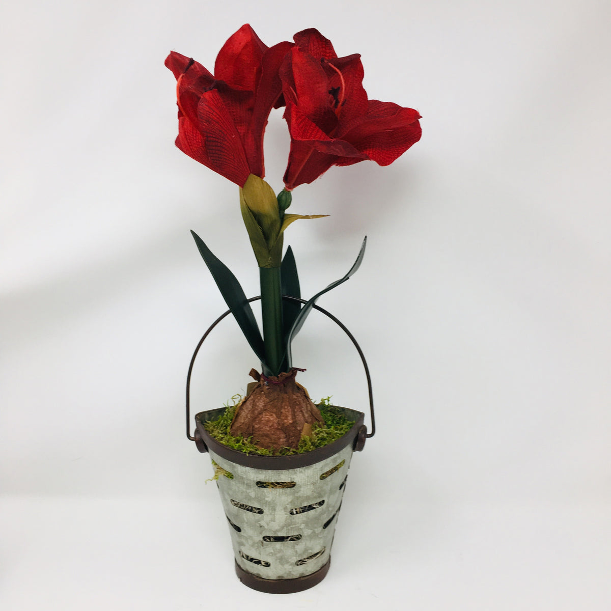Amaryllis plant in metal bucket
