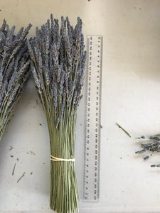 Australian Dried Lavender Bunch Medium