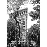 Flatiron With Trees