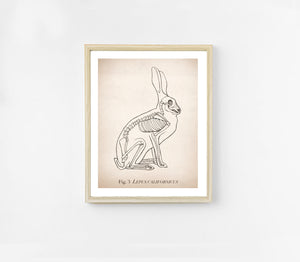 Rabbit Anatomy Print