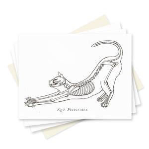 Cat Anatomy Box Set of 6 Cards