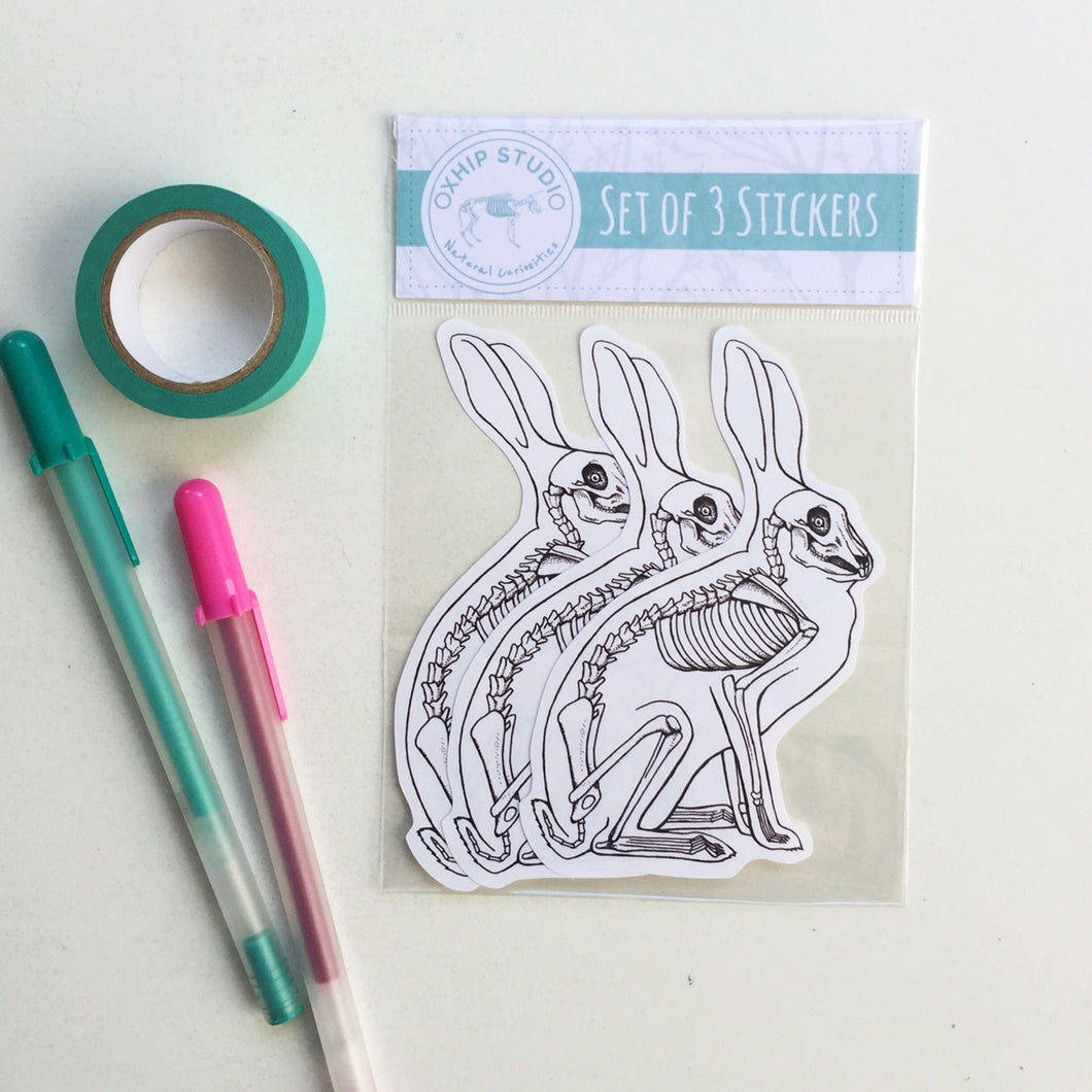 Bunny Anatomy Sticker Set.