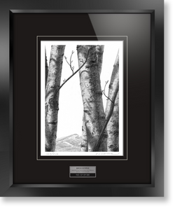 "Framed limited edition print of original Doug Fluckiger drawing ""Birch Nymphs"""