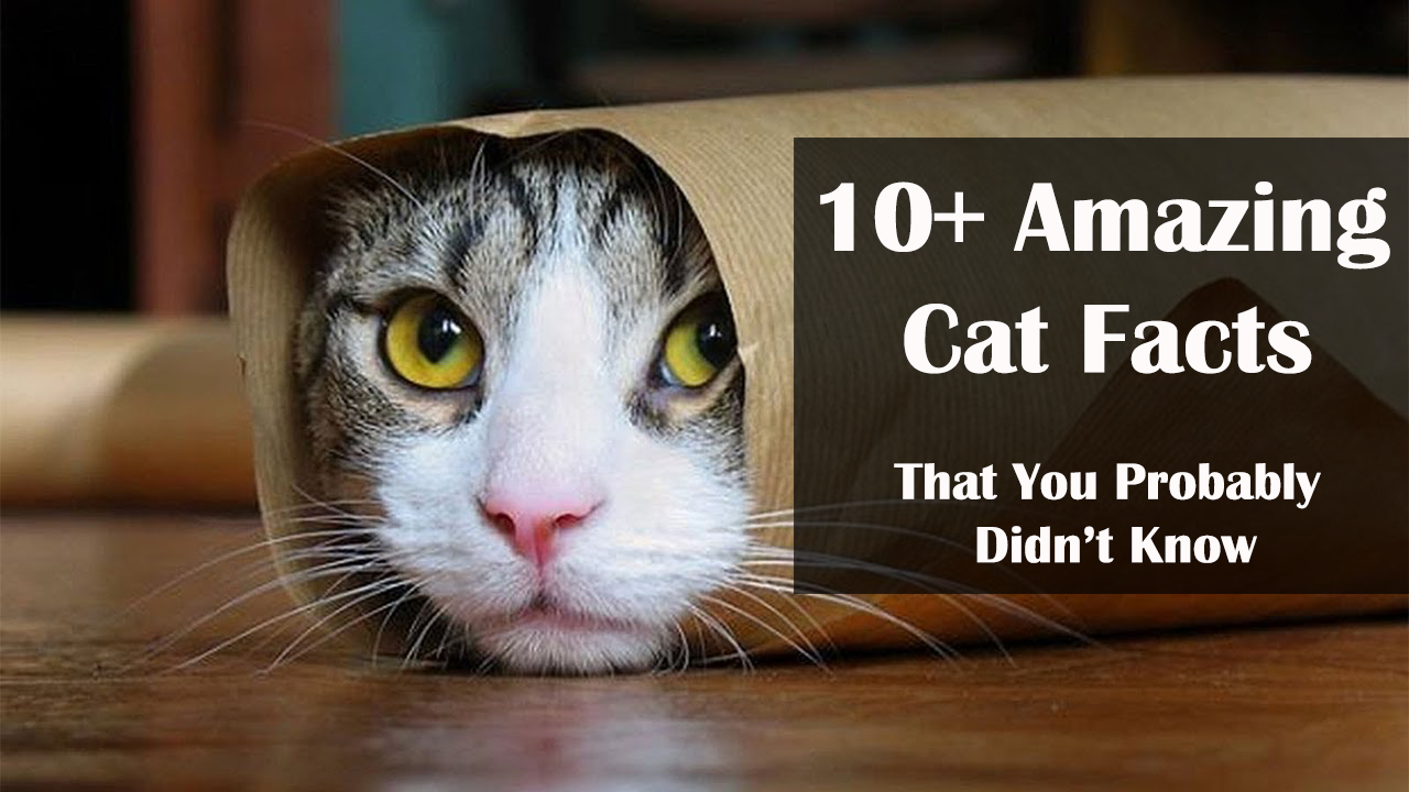 Top 10 Interesting Facts You Never Knew About Cats