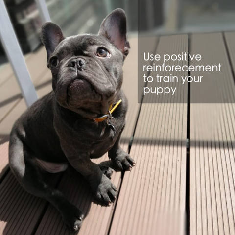 How to train my puppy, use positive reinforcement to train your puppy, how to train your dog, click at bottom of page to download free guide
